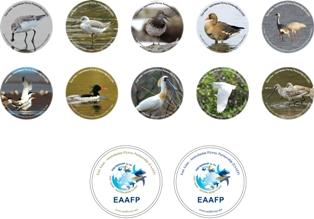 Copyright 2011 Partnership for EAAF