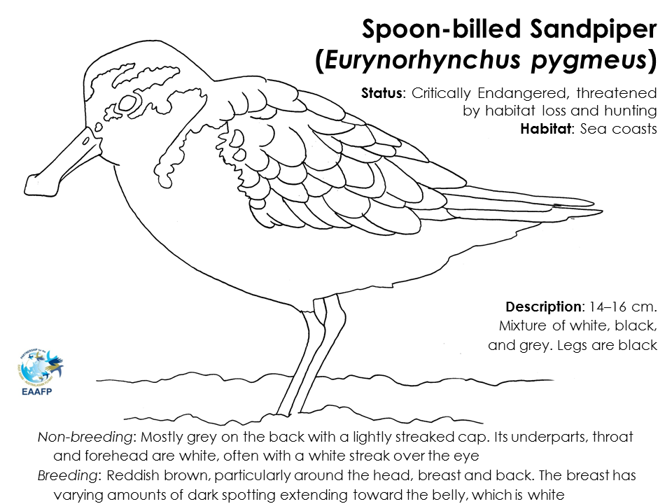 Species Flyer_BFS_FINAL (outlined text)