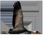 White-naped crane from Poyang Lake vsmall