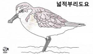 A colouring  of Spoon-billed Sandpiper by a student