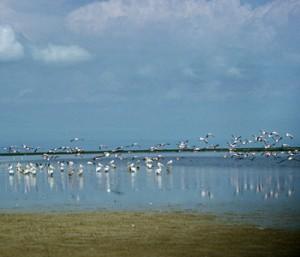 Wild Birds resting on Chale Swamp Lake near Dodoma, Tanzania UN Photo/B Wolff