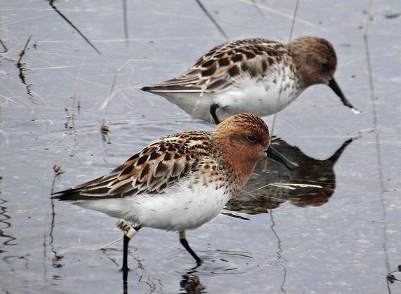 © Wildfowl & Wetlands Trust 2012
