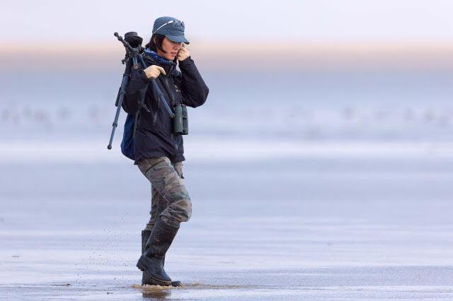 Li Jing, leader of the Spoon-billed Sandpiper in China NGO © Birding Beijing ????