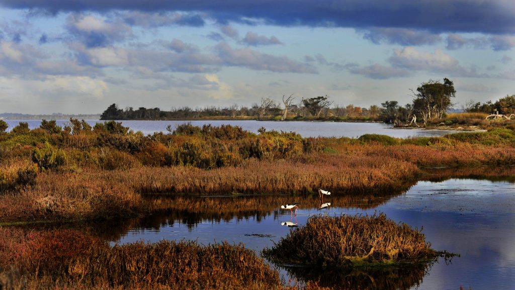 Protecting migratory waterbirds and their habitats