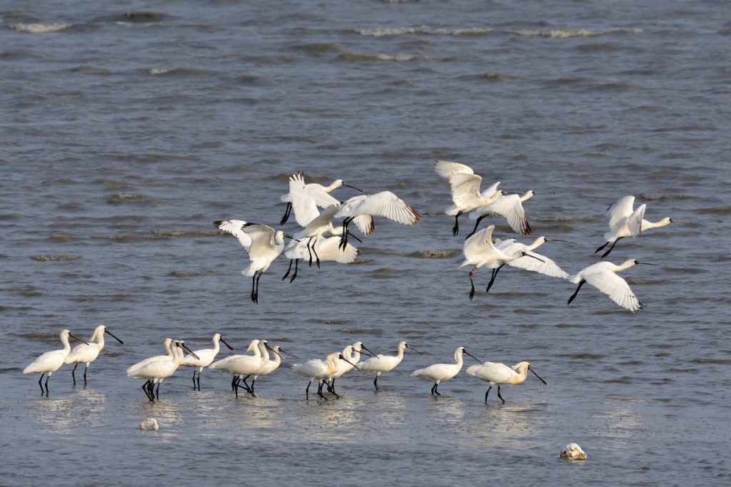 Work with local communities to protect migratory waterbirds