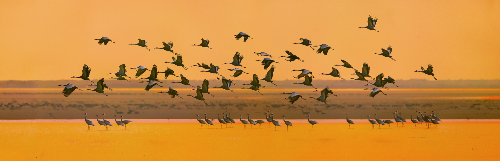 Safeguard the Flyway Network Sites