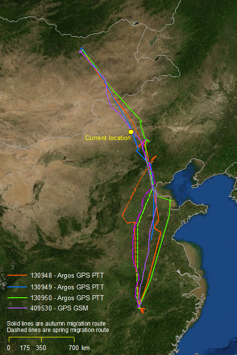 White-naped crane migration data © Wildlife Science and Conservation Center of Mongolia