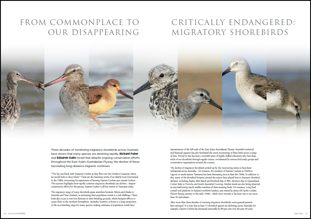 Shorebirds Jun15 LR photo