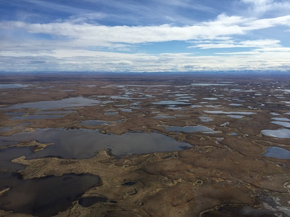 Aerial view of wetlands in the southern portion of the Yukon Delta National Wildlife Refuge © Richard Lanctot